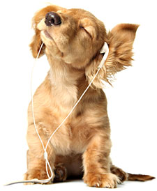 dog listening to an audiobook